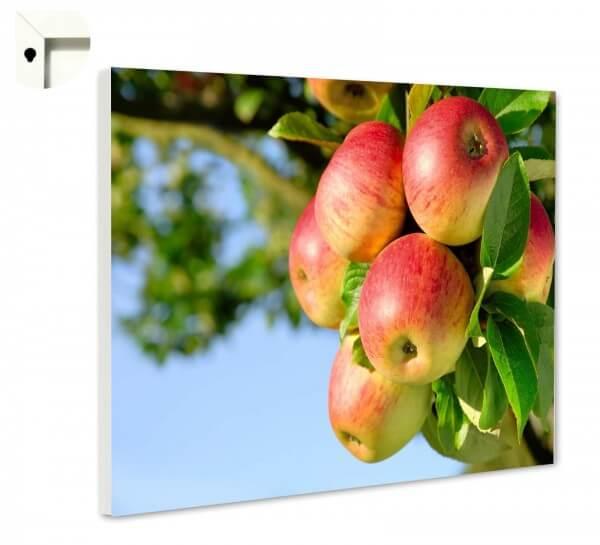 Magnettafel Pinnwand Natur Apfel Baum Herbst