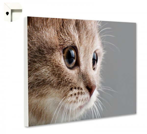 Magnettafel Pinnwand Memoboard Tiere Katze
