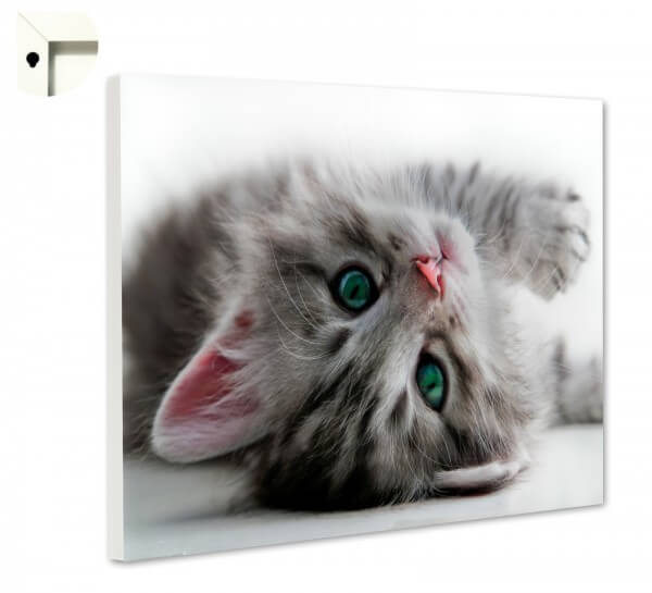 Magnettafel Pinnwand Memoboard Motiv Tiere Kleine Katze in grau