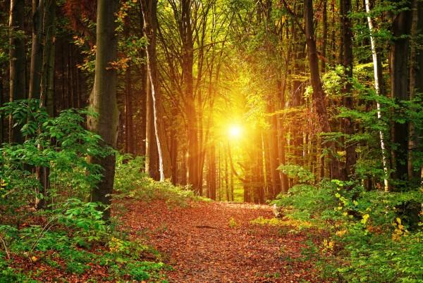 Magnettafel Pinnwand XXL Bild Natur Wald Sonne Lichtung