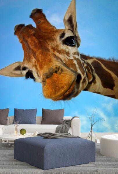 Vlies Tapete XXL Poster Fototapete Giraffe Hello