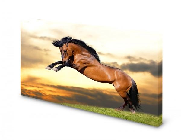 Magnettafel Pinnwand Bild Pferd wild Galopp Brauner XXL gekantet