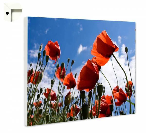 Magnettafel Pinnwand Mohnblumen im Sommerhimmel