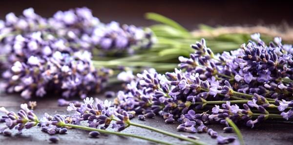 Magnettafel Pinnwand Bild XXL Panorama Heilkräuter Lavendel