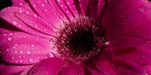 Magnettafel Pinnwand Bild XXL Panorama Blume Floral pink magenta