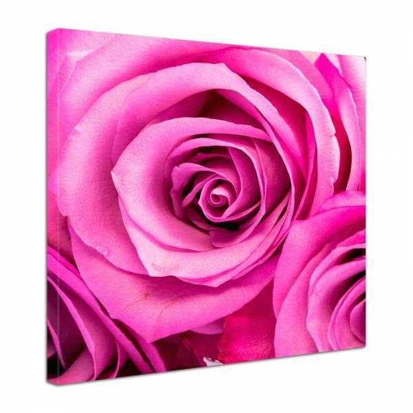 Leinwand Bild edel Blumen pinke Rosenblüte