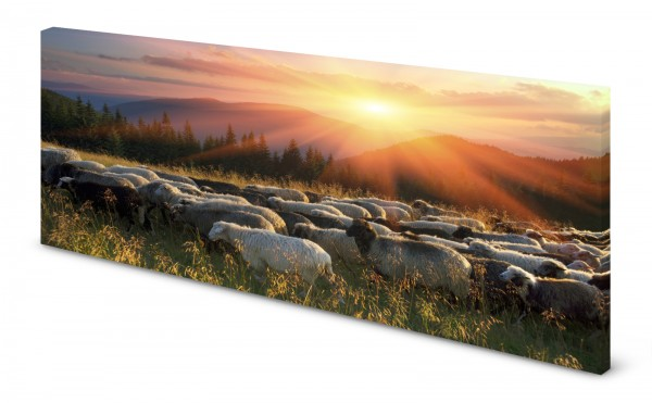 Magnettafel Pinnwand Bild Natur Berge Schafe Schafherde gekantet