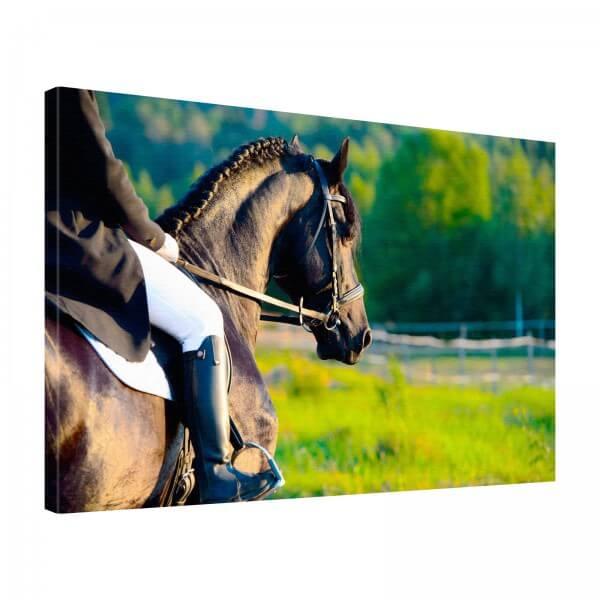Leinwand Bild edel Tiere Pferd Dressur