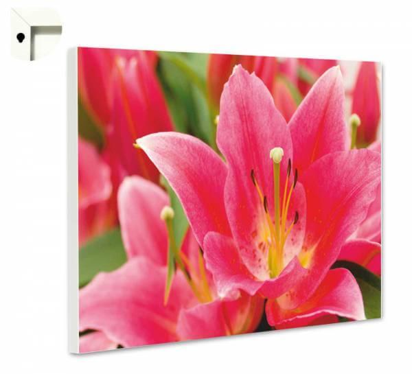 Magnettafel Pinnwand Natur Blumen Lilie in pink