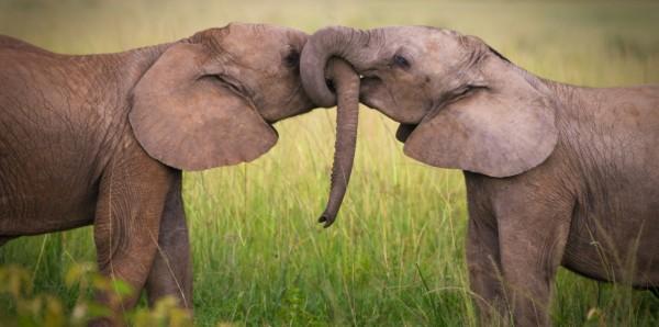 Magnettafel Pinnwand Bild XXL Panorama Elefanten Babys