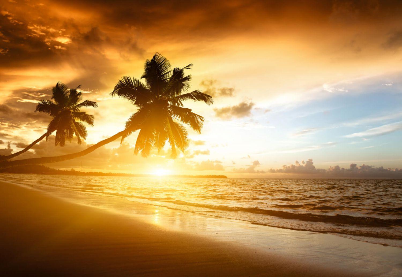xxl poster fototapete tapete vlies natur palmen im sonnenuntergang ebay. Black Bedroom Furniture Sets. Home Design Ideas
